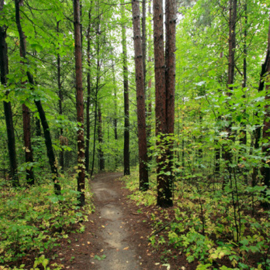 Popular Nature Trails Near Waxhaw, North Carolina